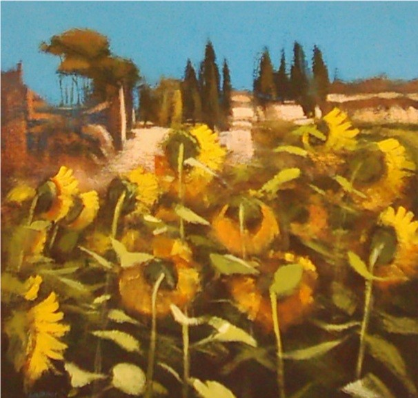 Sunflowers,Umbria